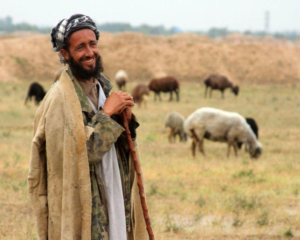 afghan_shepherd
